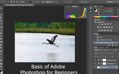 Basic of Adobe Photoshop for Beginners